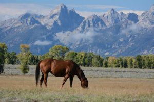 Kyra Dittmann - Dark Horse Mountain